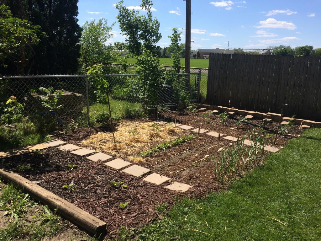 Photo taken of the garden mid summer of 2017; eggplants, broccoli, garlic and other plants are visible and growing.